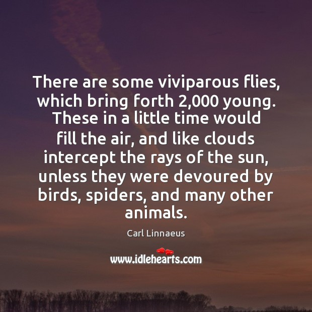 Image, There are some viviparous flies, which bring forth 2,000 young. These in a