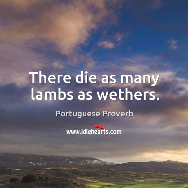 There die as many lambs as wethers. Image