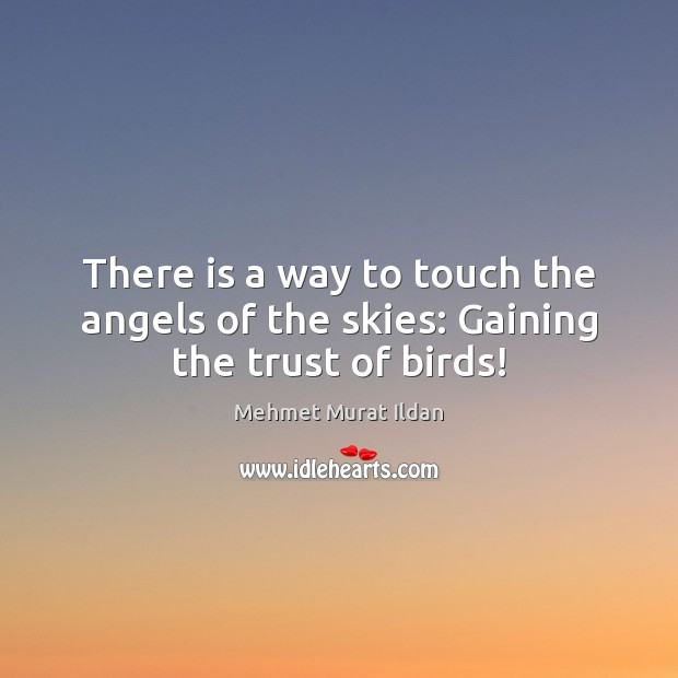 Image, There is a way to touch the angels of the skies: Gaining the trust of birds!
