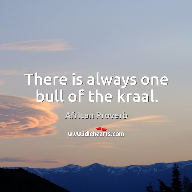 There is always one bull of the kraal. Image