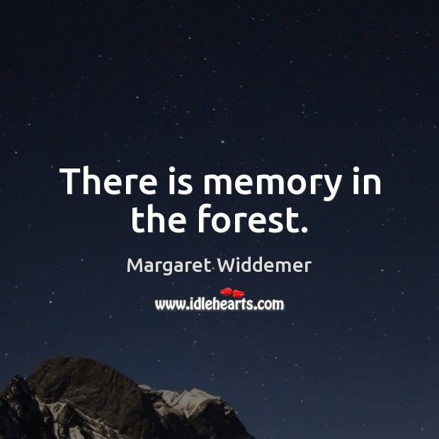 There is memory in the forest. Image