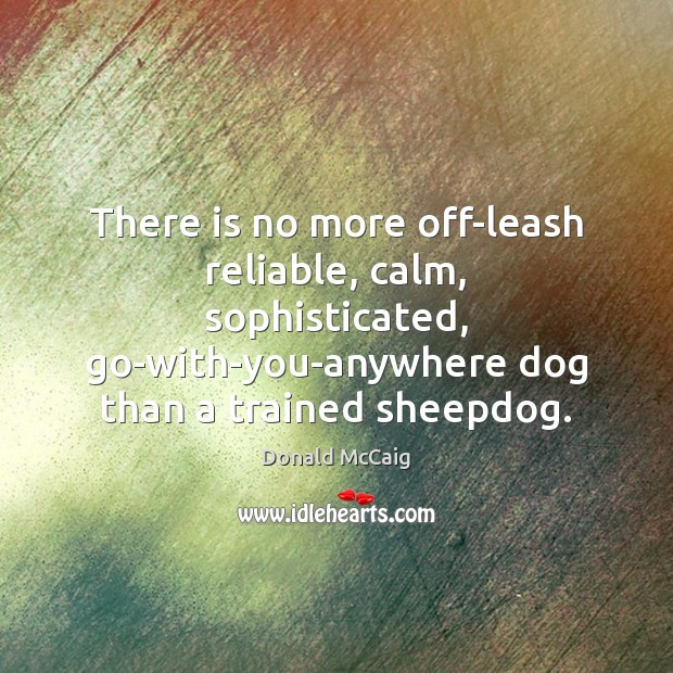 There is no more off-leash reliable, calm, sophisticated, go-with-you-anywhere dog than a Donald McCaig Picture Quote