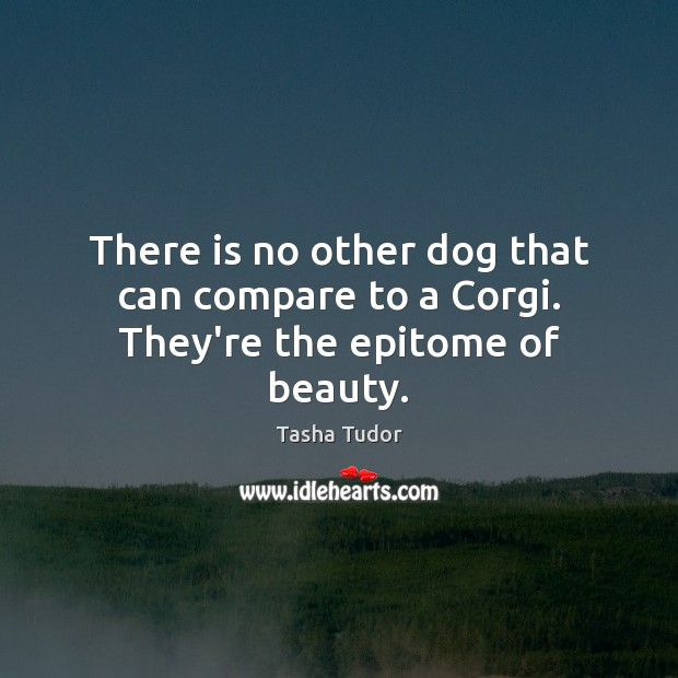 There is no other dog that can compare to a Corgi. They're the epitome of beauty. Compare Quotes Image