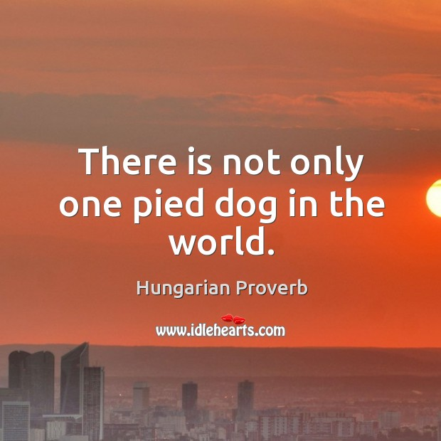 Image, There is not only one pied dog in the world.
