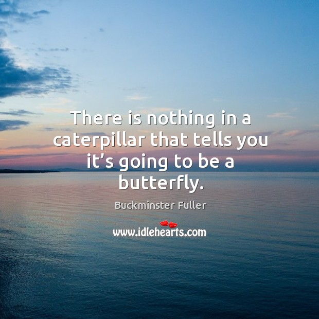 There is nothing in a caterpillar that tells you it's going to be a butterfly. Image