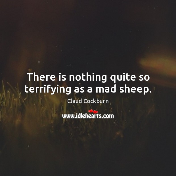 There is nothing quite so terrifying as a mad sheep. Image