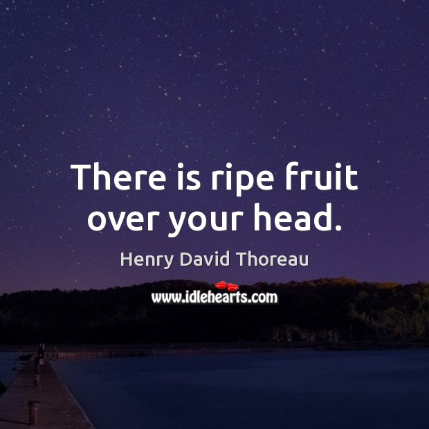 Image, There is ripe fruit over your head.