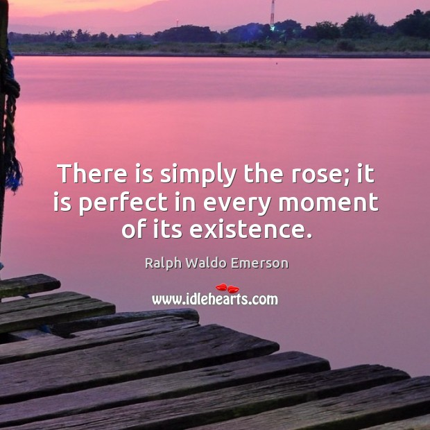 There is simply the rose; it is perfect in every moment of its existence. Image