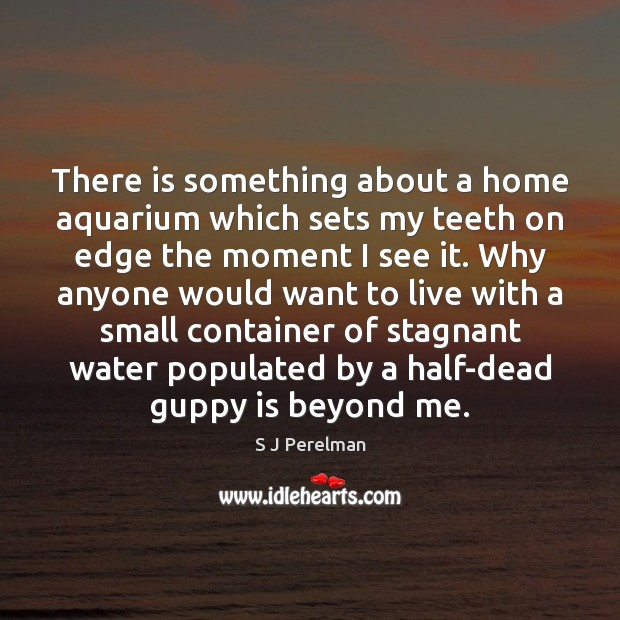 Image, There is something about a home aquarium which sets my teeth on