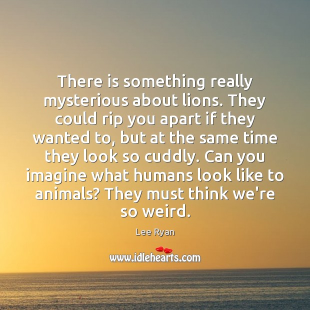 There is something really mysterious about lions. They could rip you apart Image