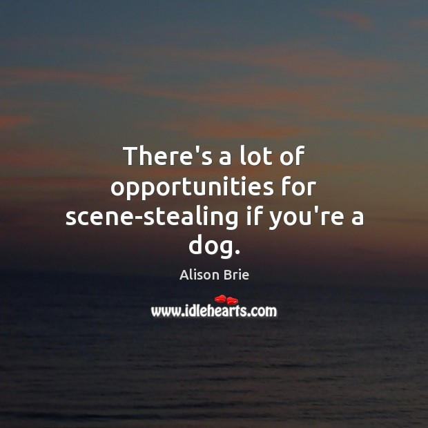 There's a lot of opportunities for scene-stealing if you're a dog. Image