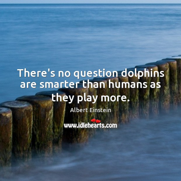 There's no question dolphins are smarter than humans as they play more. Image