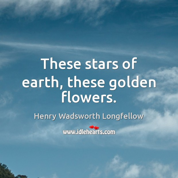 Image, These stars of earth, these golden flowers.