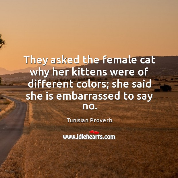 They asked the female cat why her kittens were of different colors Tunisian Proverbs Image