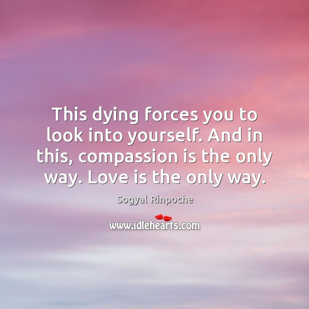 This dying forces you to look into yourself. And in this, compassion Sogyal Rinpoche Picture Quote