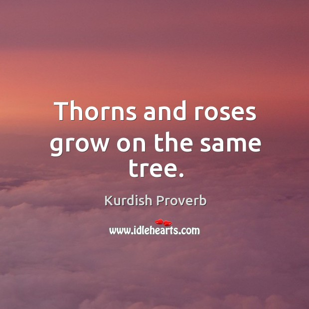 Thorns and roses grow on the same tree. Kurdish Proverbs Image