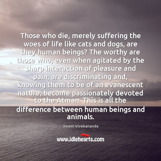 Image, Those who die, merely suffering the woes of life like cats and
