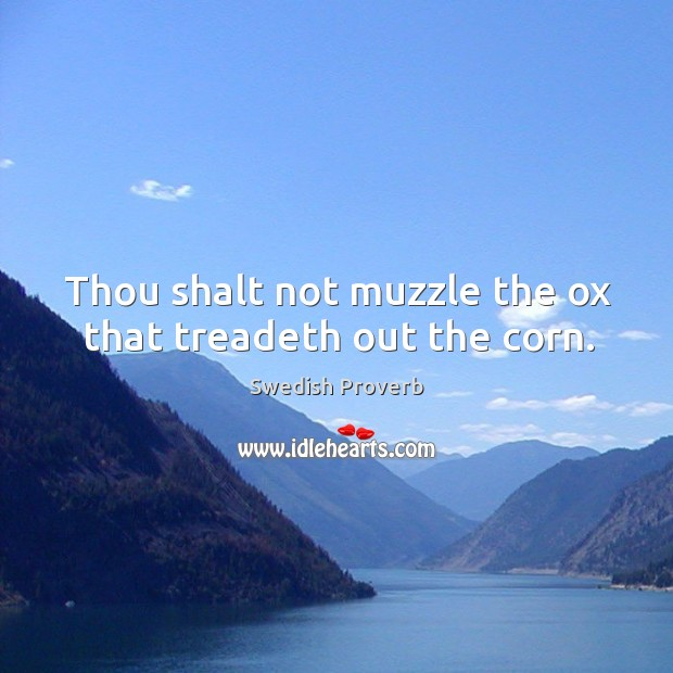 Thou shalt not muzzle the ox that treadeth out the corn. Swedish Proverbs Image