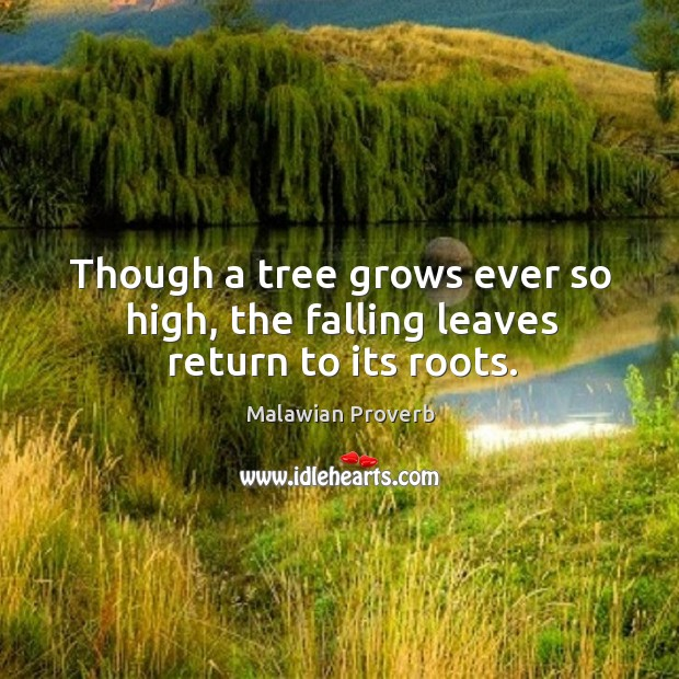 Though a tree grows ever so high, the falling leaves return to its roots. Malawian Proverbs Image