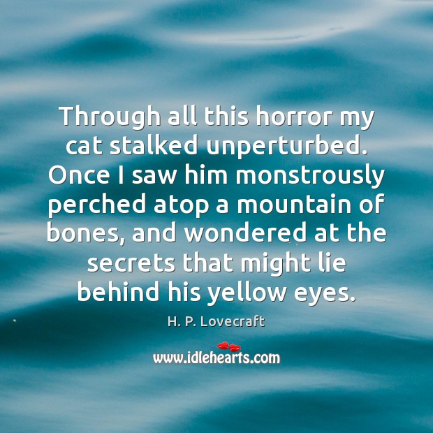 Image, Through all this horror my cat stalked unperturbed. Once I saw him