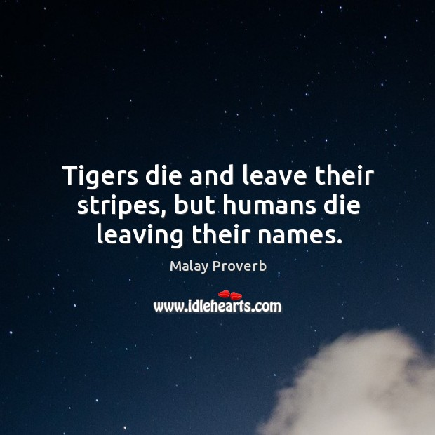 Tigers die and leave their stripes, but humans die leaving their names. Malay Proverbs Image