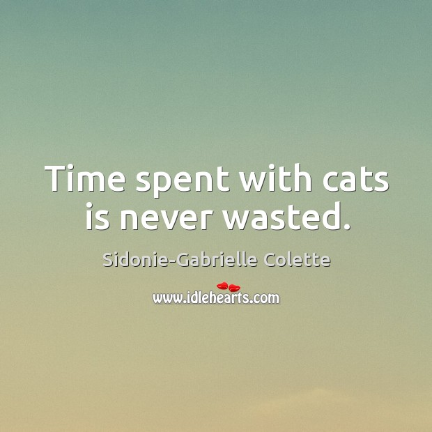 Time spent with cats is never wasted. Image