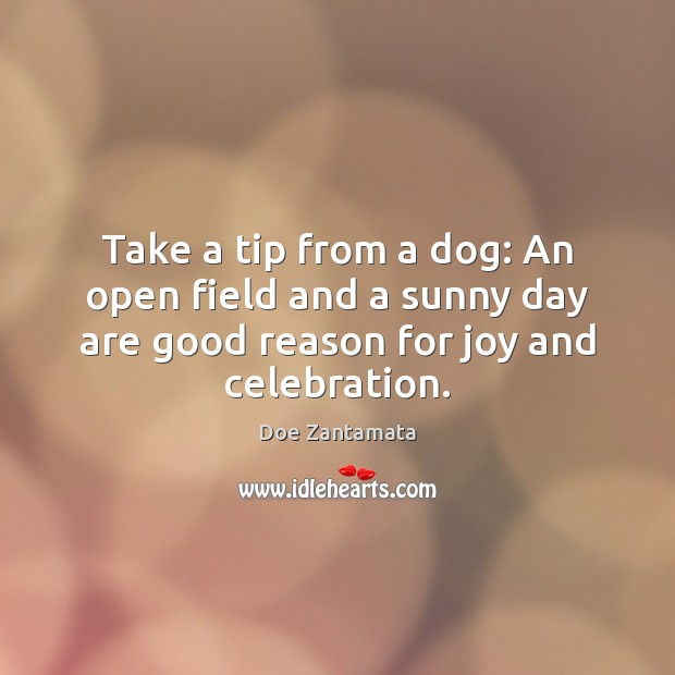 Tip from a dog. Doe Zantamata Picture Quote