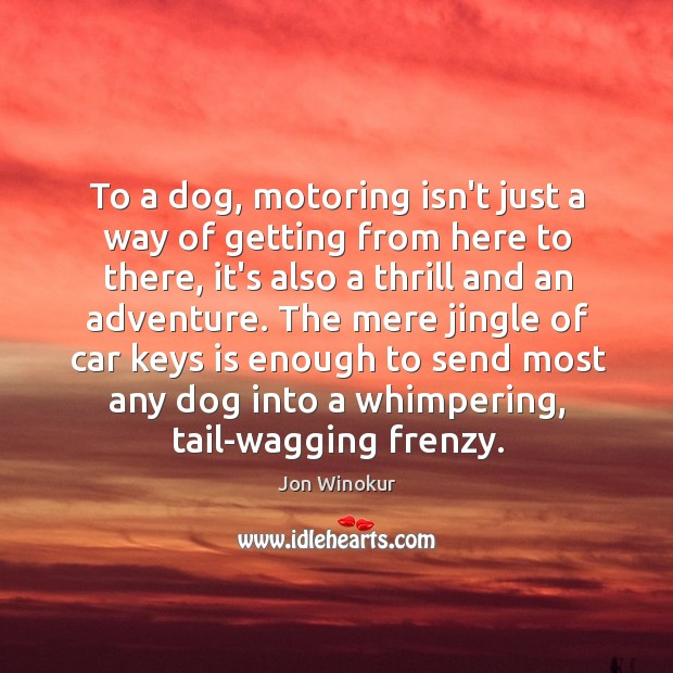 To a dog, motoring isn't just a way of getting from here Image