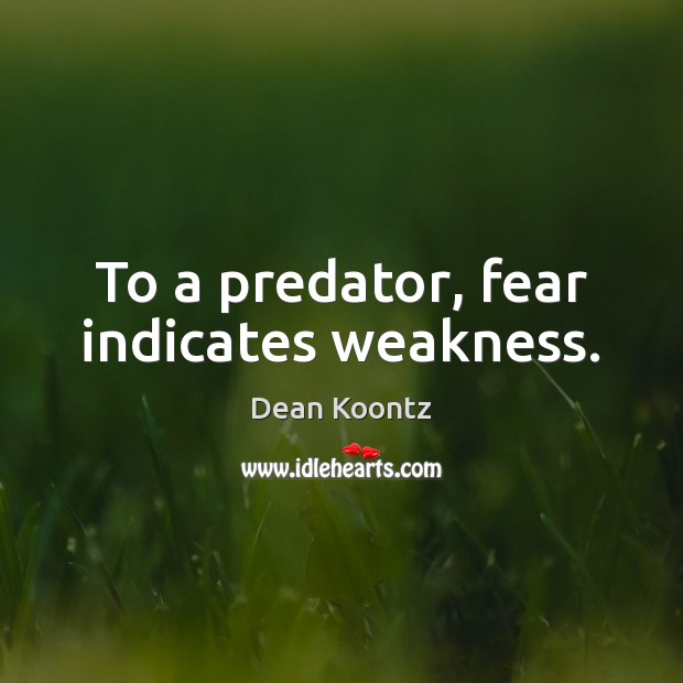 To a predator, fear indicates weakness. Image
