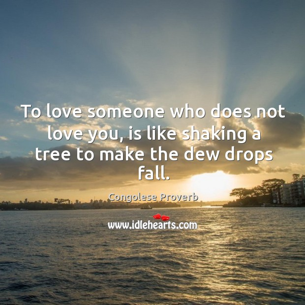 To love someone who does not love you, is like shaking a tree Congolese Proverbs Image