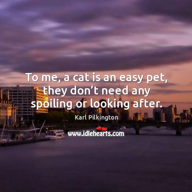 To me, a cat is an easy pet, they don't need any spoiling or looking after. Image