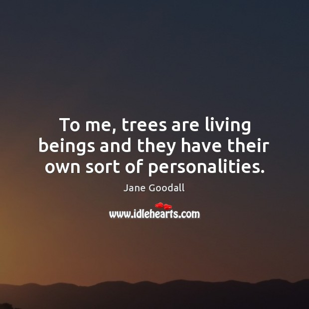 Image, To me, trees are living beings and they have their own sort of personalities.