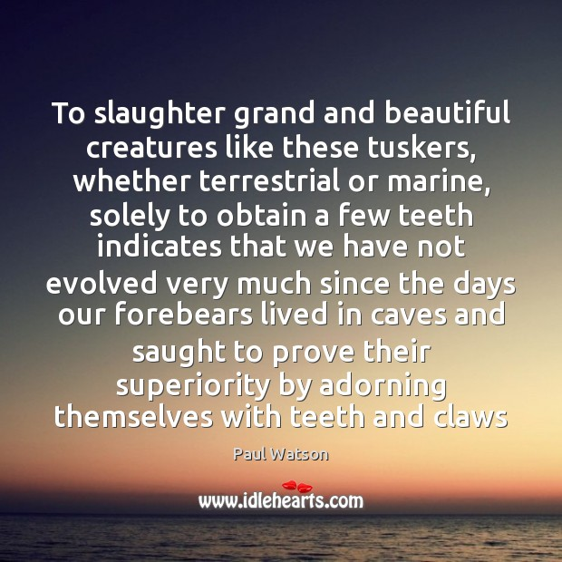 To slaughter grand and beautiful creatures like these tuskers, whether terrestrial or Paul Watson Picture Quote