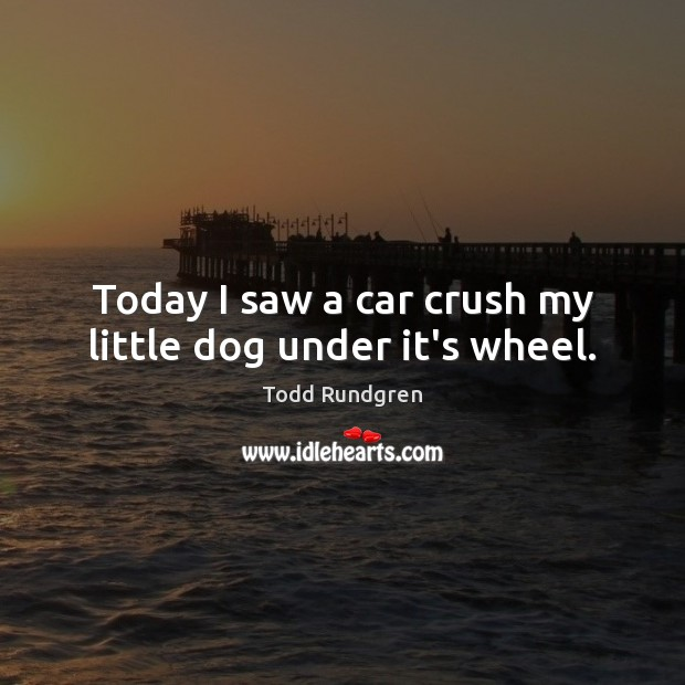 Today I saw a car crush my little dog under it's wheel. Todd Rundgren Picture Quote