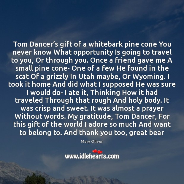 Tom Dancer's gift of a whitebark pine cone You never know Mary Oliver Picture Quote