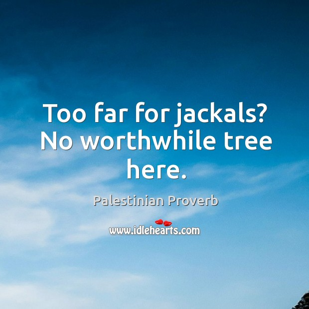 Too far for jackals? no worthwhile tree here. Palestinian Proverbs Image