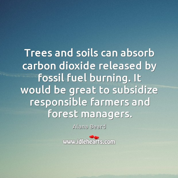 Image, Trees and soils can absorb carbon dioxide released by fossil fuel burning.