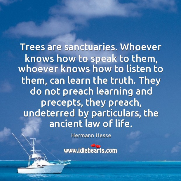 Image, Trees are sanctuaries. Whoever knows how to speak to them, whoever knows