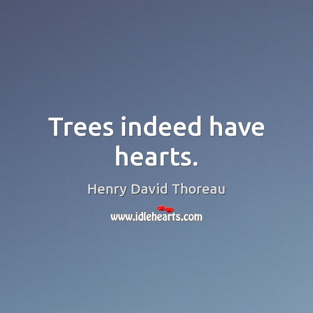 Trees indeed have hearts. Image