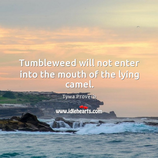 Tumbleweed will not enter into the mouth of the lying camel. Tywa Proverbs Image