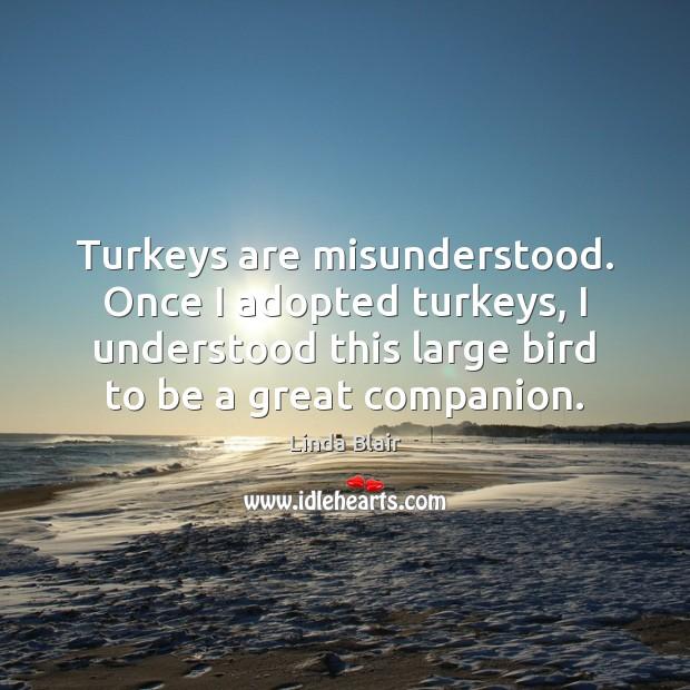 Turkeys are misunderstood. Once I adopted turkeys, I understood this large bird Image