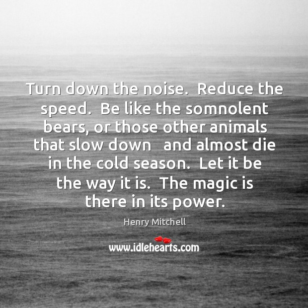 Turn down the noise.  Reduce the speed.  Be like the somnolent bears, Henry Mitchell Picture Quote