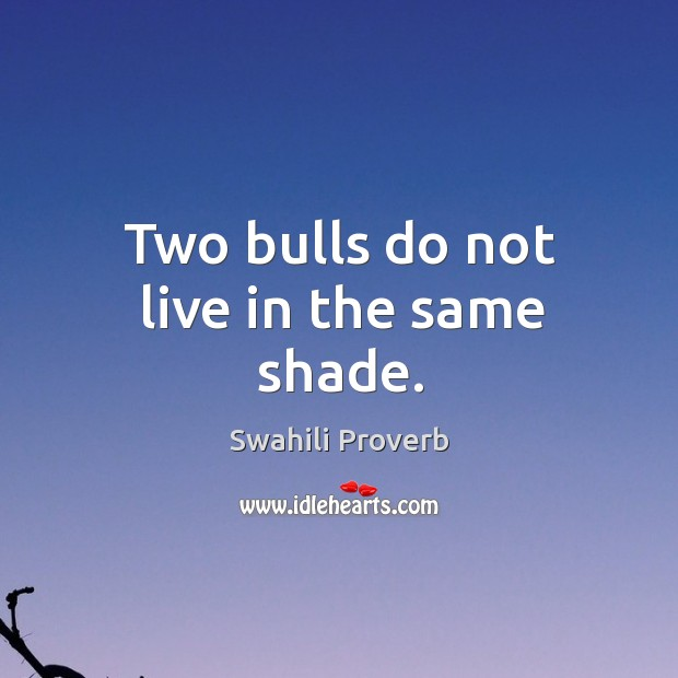 Two bulls do not live in the same shade. Swahili Proverbs Image