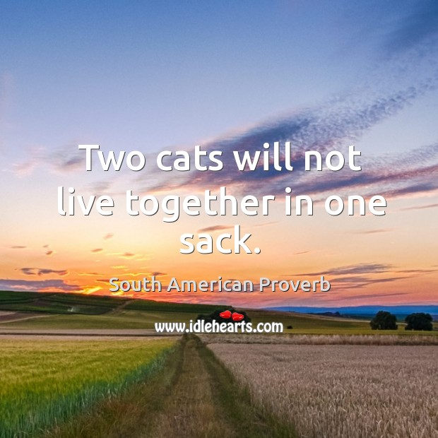 Two cats will not live together in one sack. South American Proverbs Image