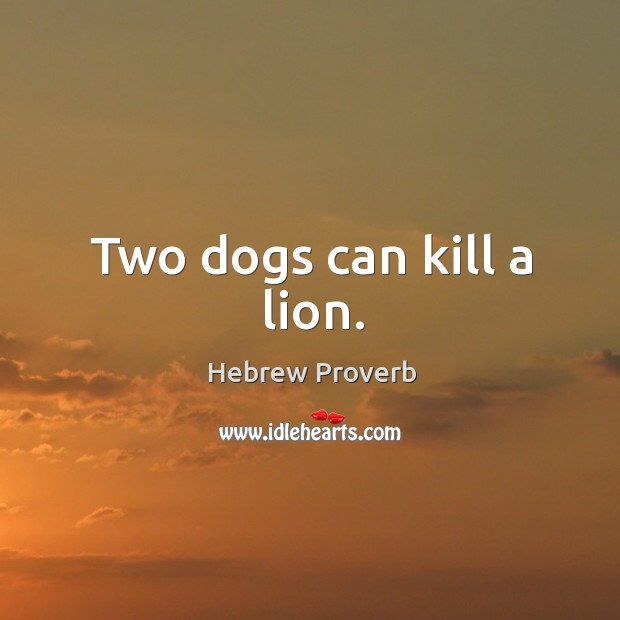 Two dogs can kill a lion. Hebrew Proverbs Image