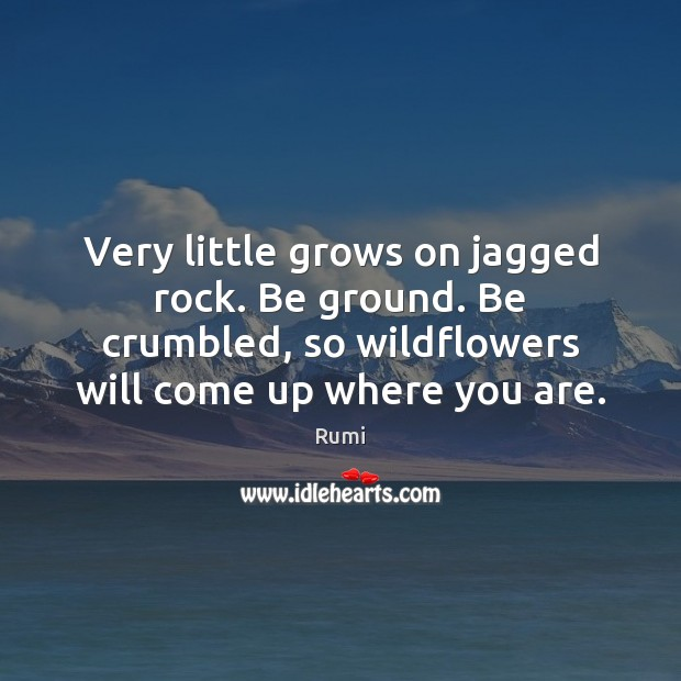 Very little grows on jagged rock. Be ground. Be crumbled, so wildflowers Image