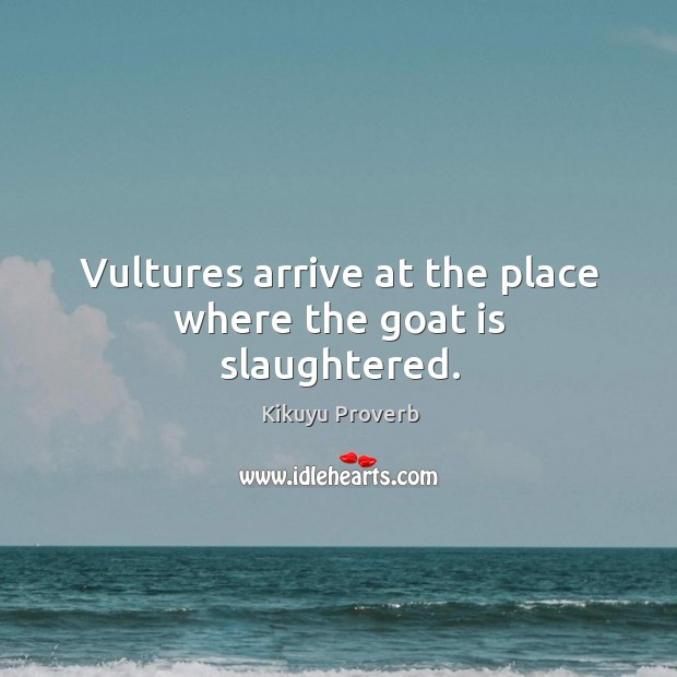 Vultures arrive at the place where the goat is slaughtered. Kikuyu Proverbs Image