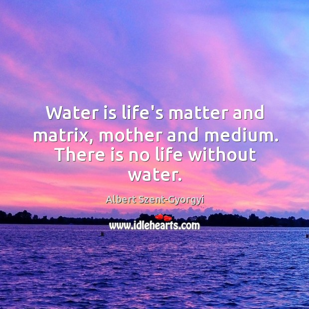 Water is life's matter and matrix, mother and medium. There is no life without water. Image