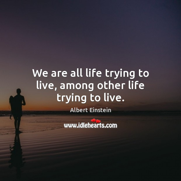 Image, We are all life trying to live, among other life trying to live.