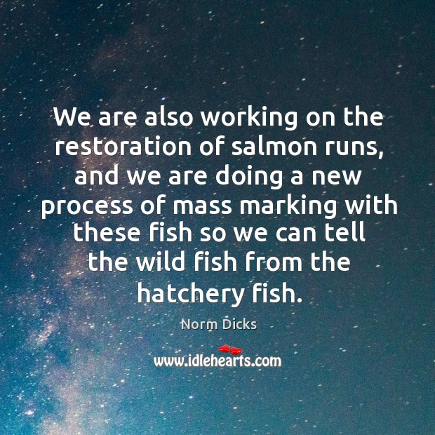 We are also working on the restoration of salmon runs Image